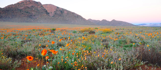 Top things to do and see in Namaqualand