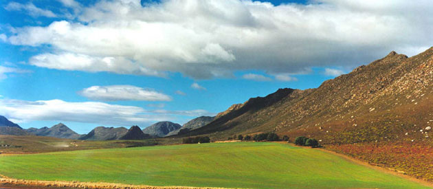 The Golden Canola Fields of Overberg
