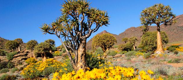Sendelingsdrif Rest Camp Businesses In The Northern Cape