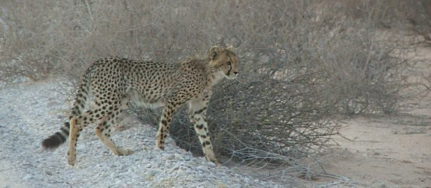 Kalahari Tours - Upington - Northern Cape