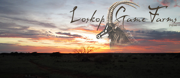 loskop, theekop, game farm, plooysburg, diamond fields, northern cape, self catering, game lodge, accommodation, hunting farm